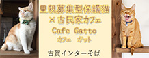 Cafe Gatto